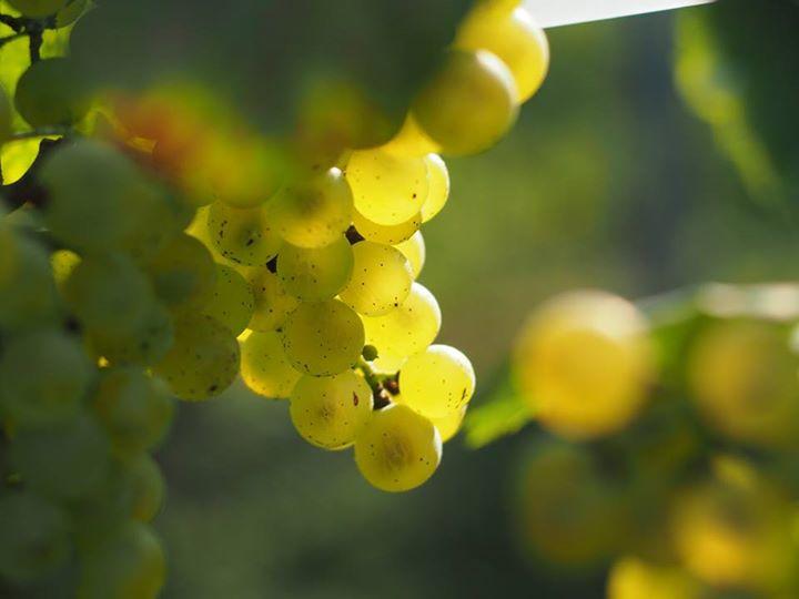 岡山ワインバレー